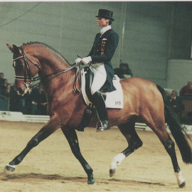 Feiner Prinz's sire Perechlest is Gone