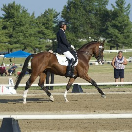 Feiner Prinz shows at MSEDA Dressage at Kentucky Horse Park